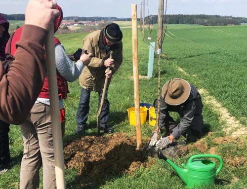 Obst- und Gartenbauverein Lohkirchen informierte zum Bäume pflanzen