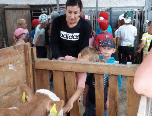 Lohkirchner Landfrauen organisieren Bayernhoftag für über 90 Kinder