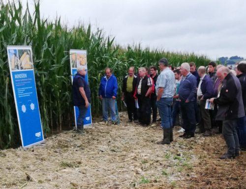 Schönberger Landwirte informierten sich beim Maisfeldtag