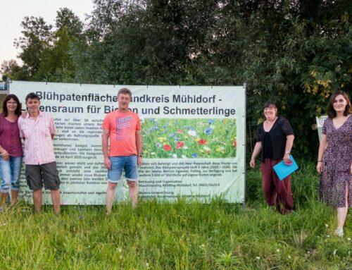 Oberbergkirchner und Zangberger Mitglieder von Bündnis 90/DIE GRUENEN besichtigten Mühldorfer Blühfläche