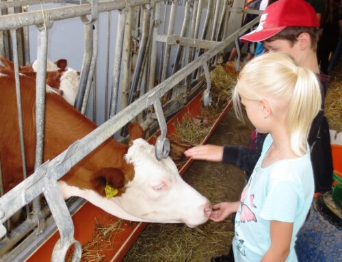 Grundschüler aus Lohkirchen und Schönberg besuchten Bauernhof