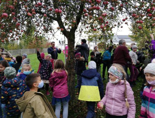 Oberbergkirchner Grundschüler bei der Apfelernte